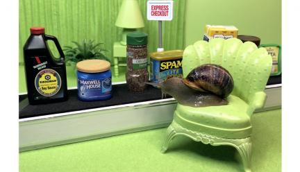 Snail on a chair looking at groceries