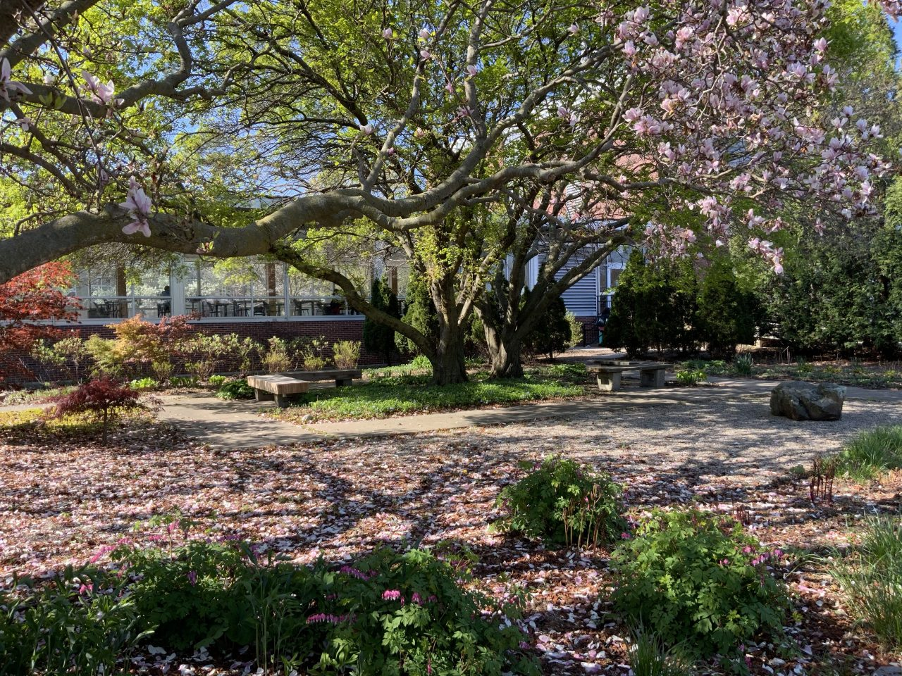 Photo of spring blooms in the south garden with A&D building in the background