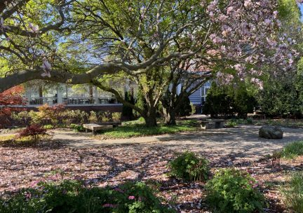 View of spring blooms in the north garden at the Art & Design Building